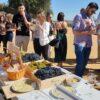 visitas en vendimia a Bodegas Fariña